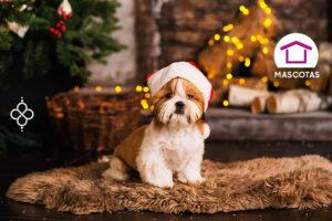 tips para cuidar a tus mascotas