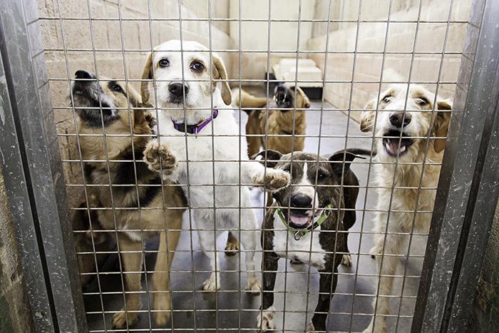 Adopción de perros refugios