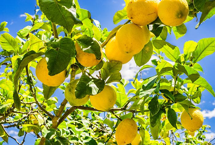 aceite de limón amarillo