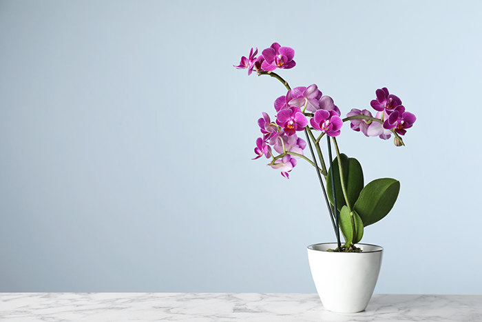 orquideas en casa