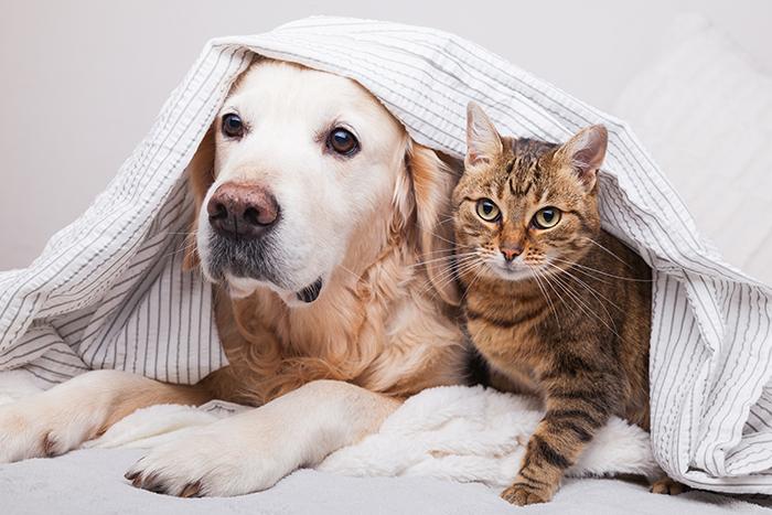 estilo de vida mascotas