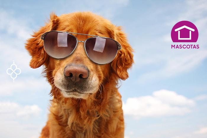 10 nombres para perros basados en personajes famosos